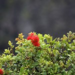 Iao Valley / Maui